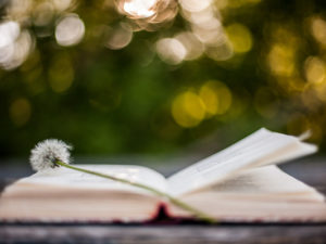 poetry improves your writing